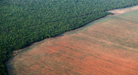 Εκθεση-σοκ: 1 στα 8 είδη, ζώα ή φυτά θα εξαφανιστούν